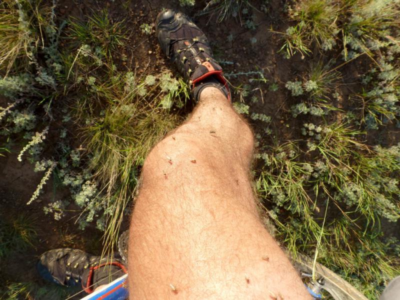 20160805. Обычный вид моих ног, атакуемых комарами во время пересечения подтопленных низин.