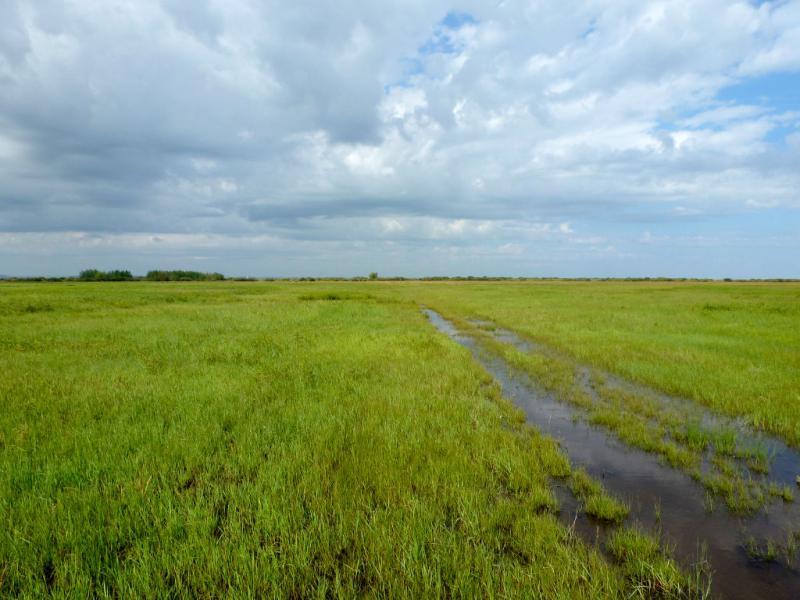 20160806. На полностью затопленном лугу в пойме речки Оленты, неподалеку от села Бозтал.