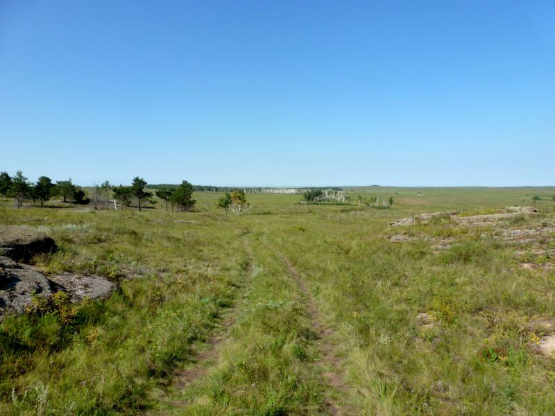 20160809. Горно-степная заросшая дорога в сопках под селом Ржищево.