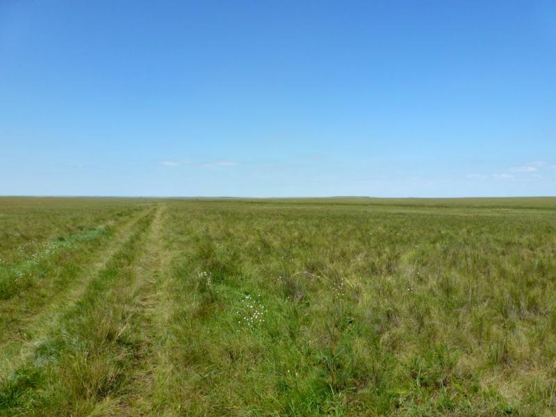 20160809. Полузаросшая степная дорога между сёлами Ржищево и Жолбасшы.