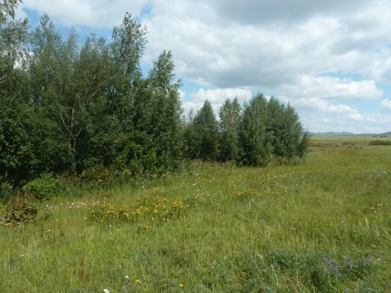 20110809. Павлодар-Астана. Плотина на притоке реки Кумая.