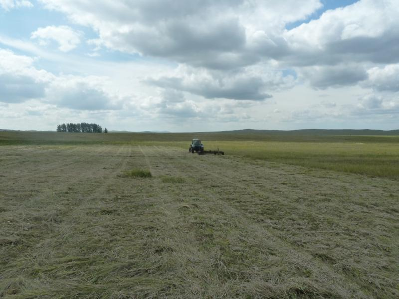 20110809. Павлодар-Астана. Вот так получается сено.