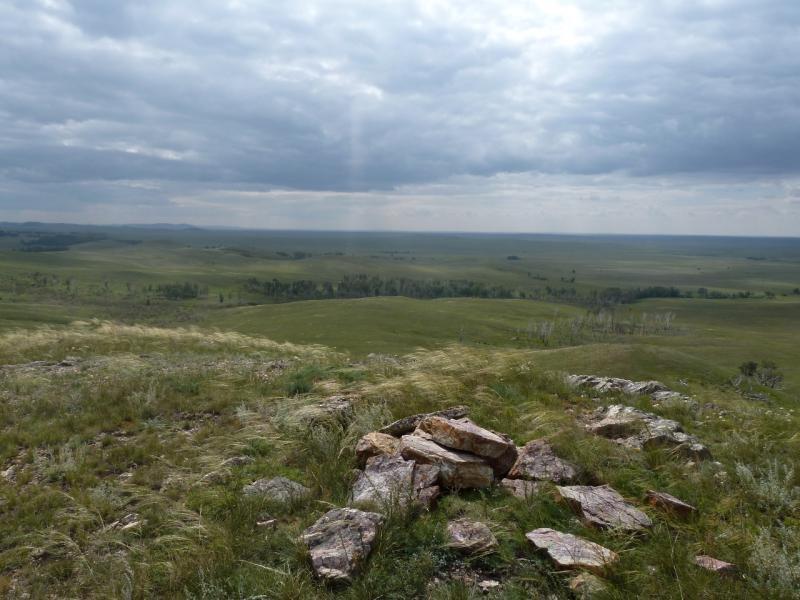 20110809. Павлодар-Астана. Где-то там - роща чёрной ольхи.