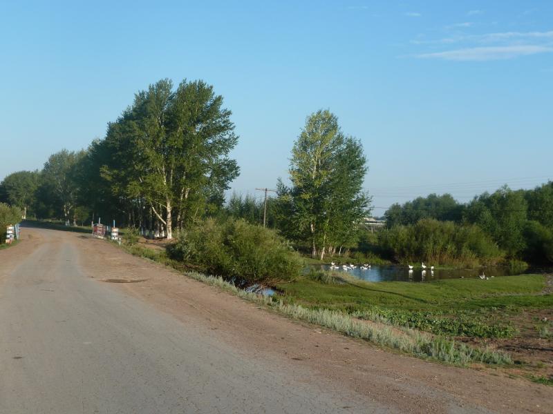 20110811. Павлодар-Астана. Благодатная пастораль.