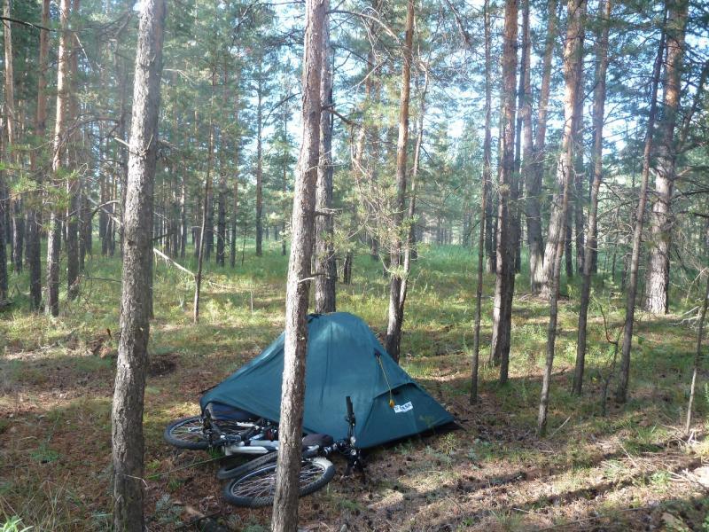 20110818. Астана-Боровое. Утро в сосновом бору над Красным Кордоном.