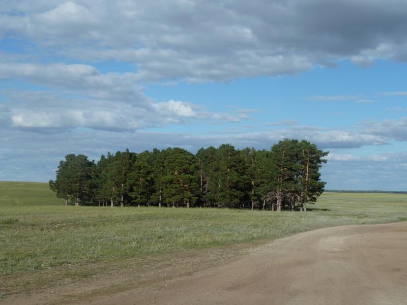 20110818. Астана-Боровое. Кучки деревьев на склонах холмов у озера Жукей.