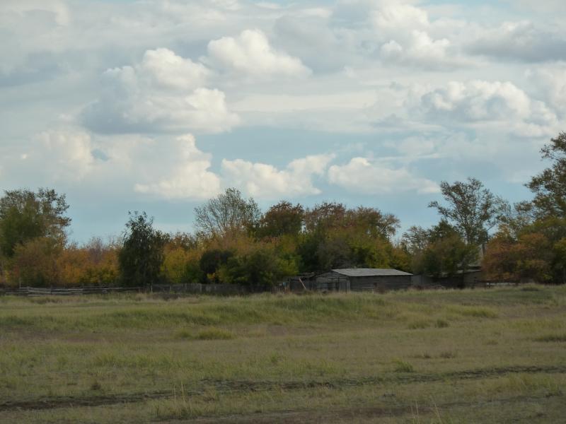 20110924. Павлодар-Чалдай. Деревянные сараи Чигириновки - сосновый бор рядом.