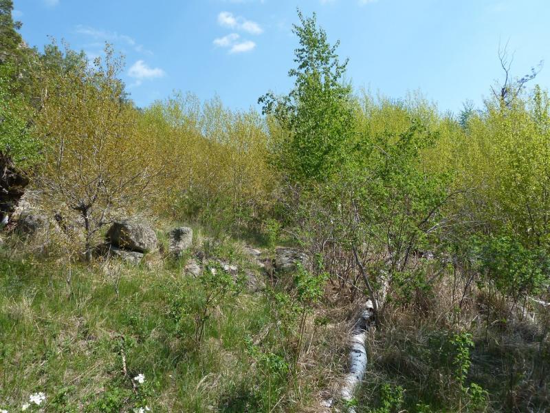 20120509. Ущельями Баянаула: заросли юго-восточной части долины Жамбак.