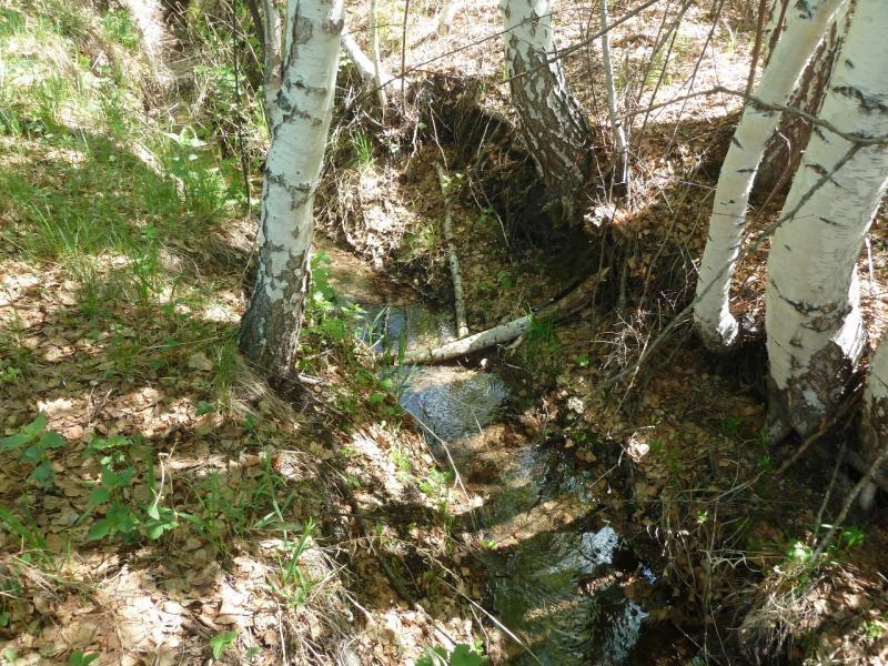 20120509. Ущельями Баянаула: ручей в юго-восточной части долины Жамбак.