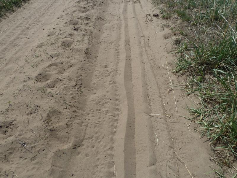 20120513. Сосновыми борами ВКО: дорожное покрытие типичной дороги между сосновыми борами.
