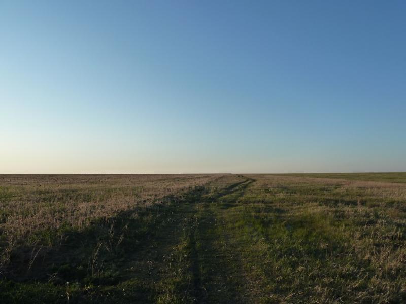 20120516. Краем Щербактинского района: полевая заросшая дорога на север от села Степное.