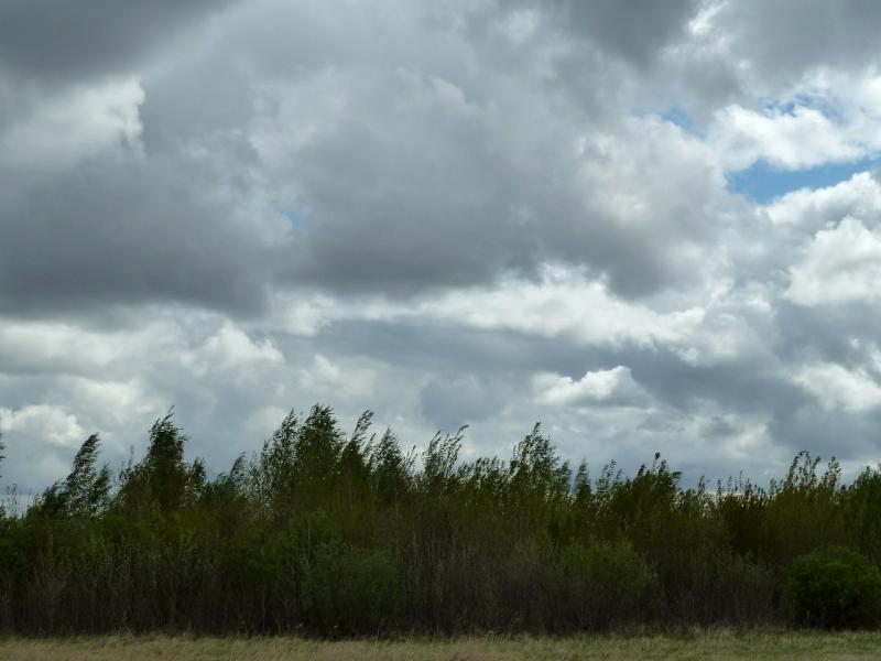 20120519. Днёвка в березняке: утренний вид.