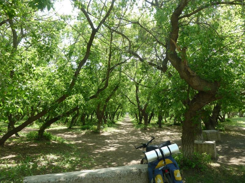 20120524. На юг, вдоль Иртыша: в парке села Прииртышское.