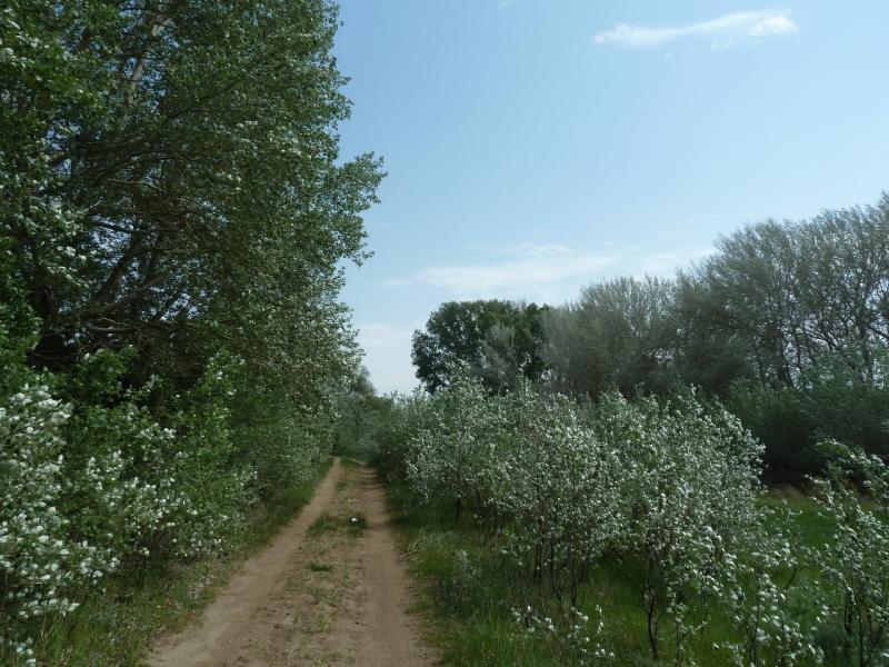 20120524. На юг, вдоль Иртыша: пойменной дорогой.