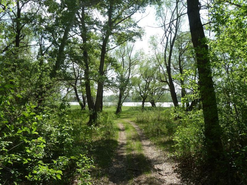 20120524. На юг, вдоль Иртыша: пойменными дорогами, между Прииртышском и Башмачным.