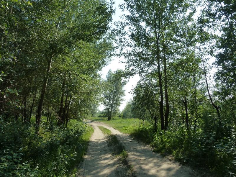 20120715. Павлодар-Аксу: тенистые дороги на окраине посёлка Аксу.