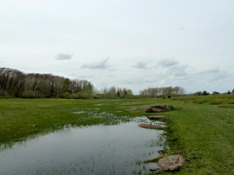 20130424. Разлившийся ручей в долине неподалеку от посёлка Торайгыр.