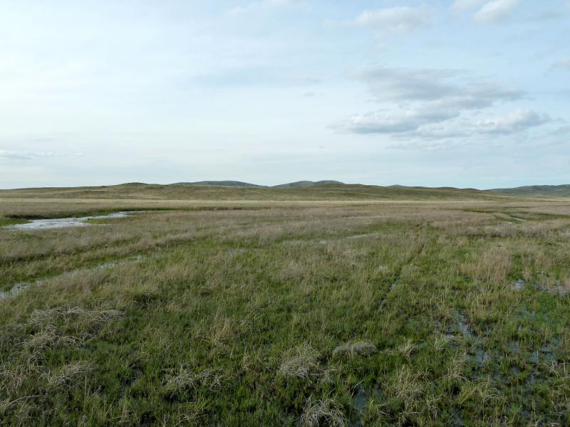 20130426. В подтопленной долине речки Кырган, у гор Желтау.