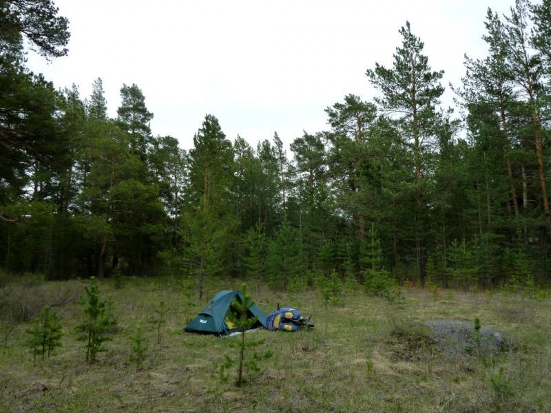 20130429. Вид на место ночной стоянки в сосновом лесу в Каркаралинском заповеднике.