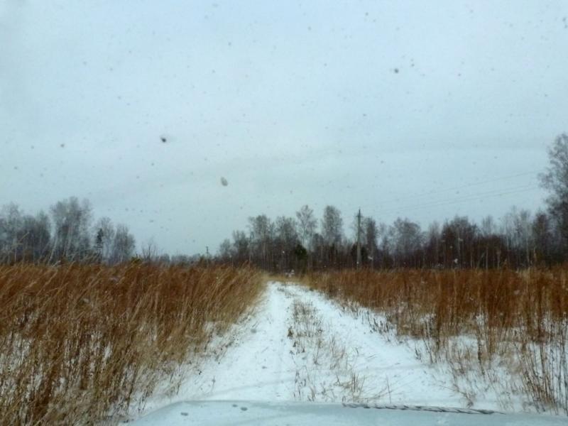 20181104. Полевая дорога вдоль речушки Ивановка, на севере Новосибирского района.