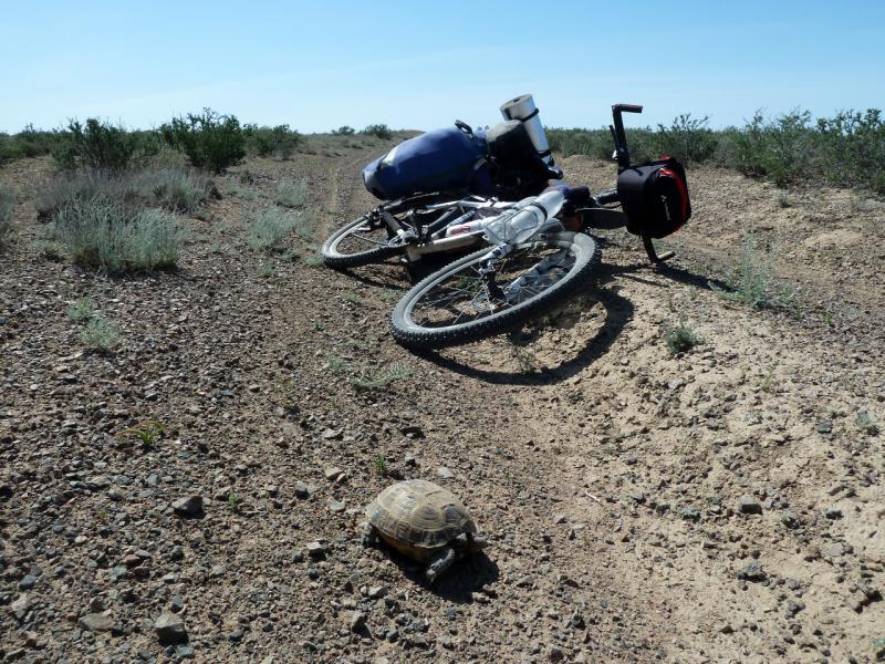 20130510. Черепашка на дороге.