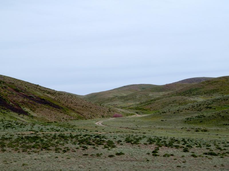 20130510. В холмах Чу-Илийского хребта, неподалеку от Хантау.