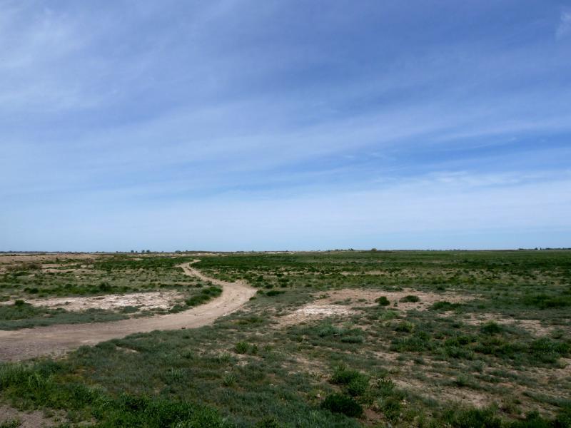 20130511. Полупустыни севернее села Бирлик (Брлик).