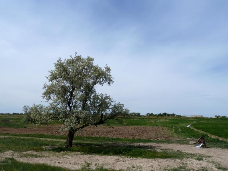 20130511. Придорожный пейзаж, поля вдоль реки Чу.