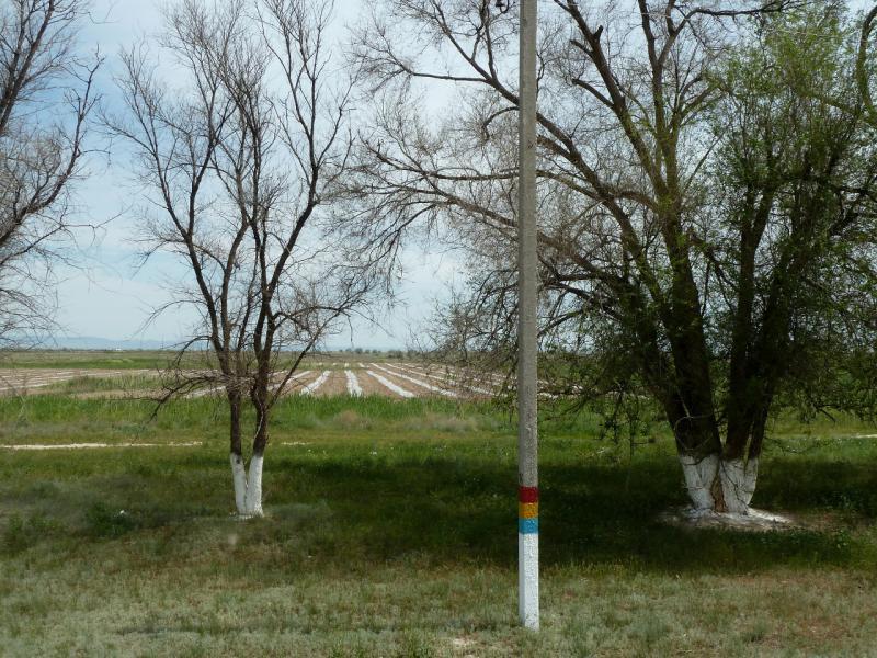 20130511. При дороге А-358, в северной части Чуйской долины.