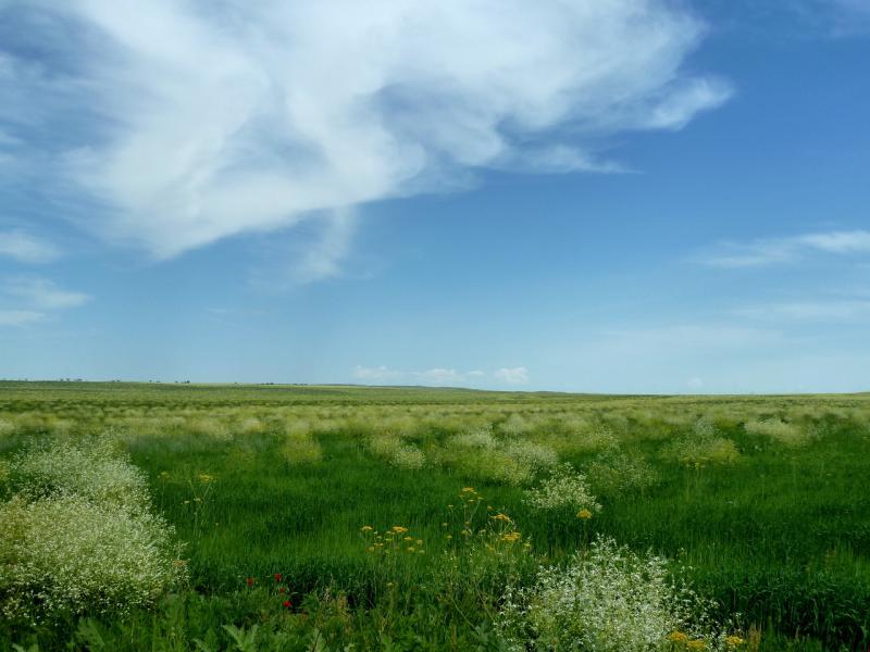 20130512. В долине у Тасуткольского водохранилища.