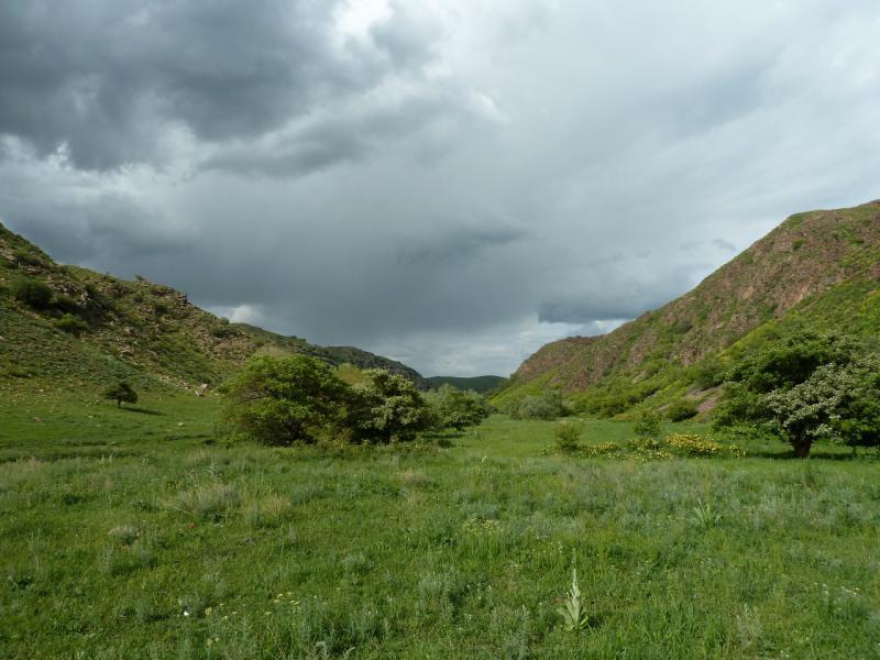 20130513. В долине речки Карасулы, в трёх километрах от села Щербакты.