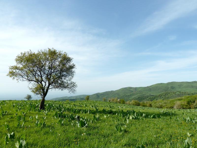 20130518. В горах Заилийского Алатау.