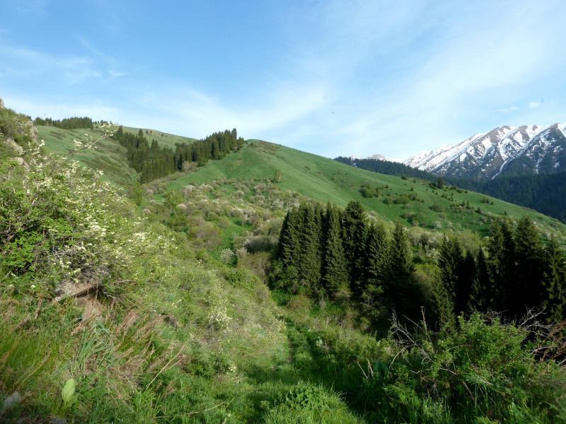 20130518. Тропа в горах Заилийского Алатау (на высоте 1800 метров относительно уровня моря).