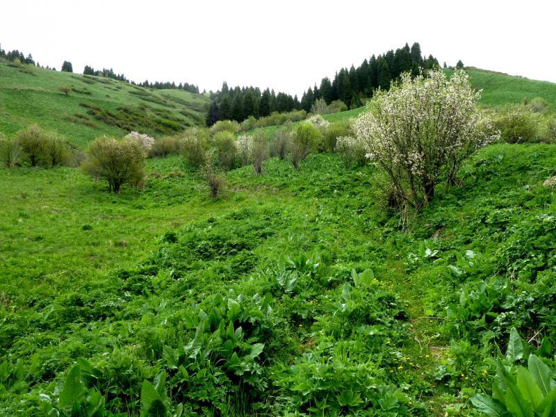 """20130519. Тропами в горах Заилийского Алатау, по пути в """"тургеньское"""" ущелье."""