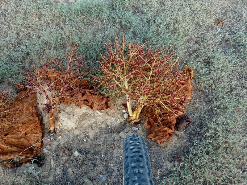 20130520. Растительность Согетинской равнины.