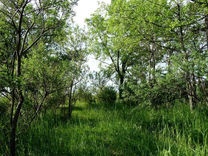 """20130525. Вид из """"двери"""" палатки на месте стоянки у села Лесновка."""