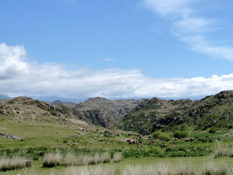 20130526. В ложбинах гор у дороги в урочище Аяксаз.