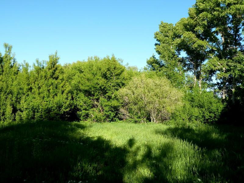 20130531. Вид на место стоянки в лесопосадках неподалеку от села Большая Буконь.