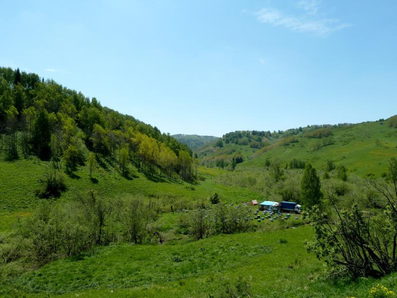 20130607. Стоянка пчеловодов под перевалом Осиновский.
