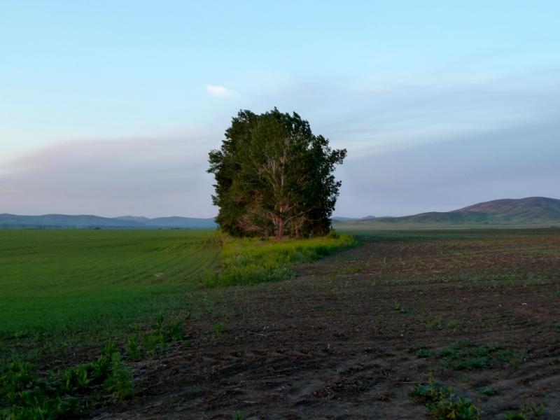 20130608. Вид на место ночной стоянки в лесопосадке между пахотных полей урочища Молчановы Ямы.