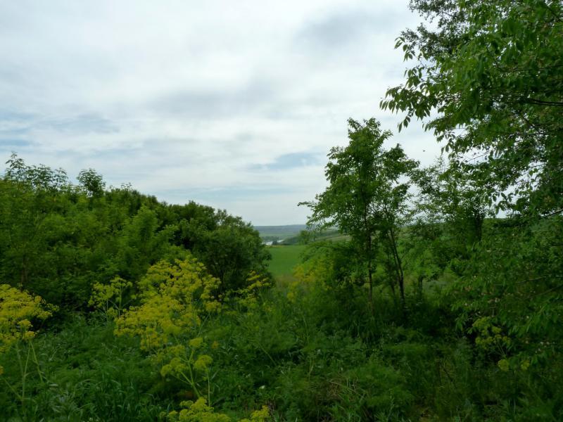20130609. Вид с дороги через лесопосадки.