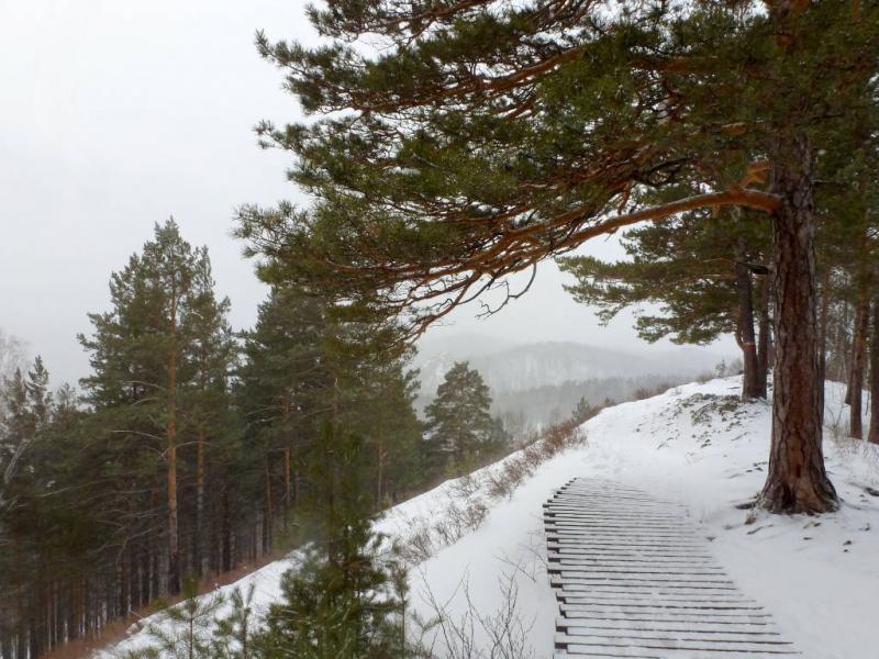 20200222. Красноярск. Столбы. На вымощенной деревом тропе, перед спуском в Каштаковский лог.
