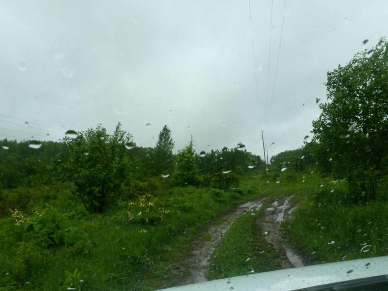 20200531. Мокрая лесная дорога, которой я не проехал далее пары сотен метров - не захотел оставаться тут надолго, откапываясь из грязи.