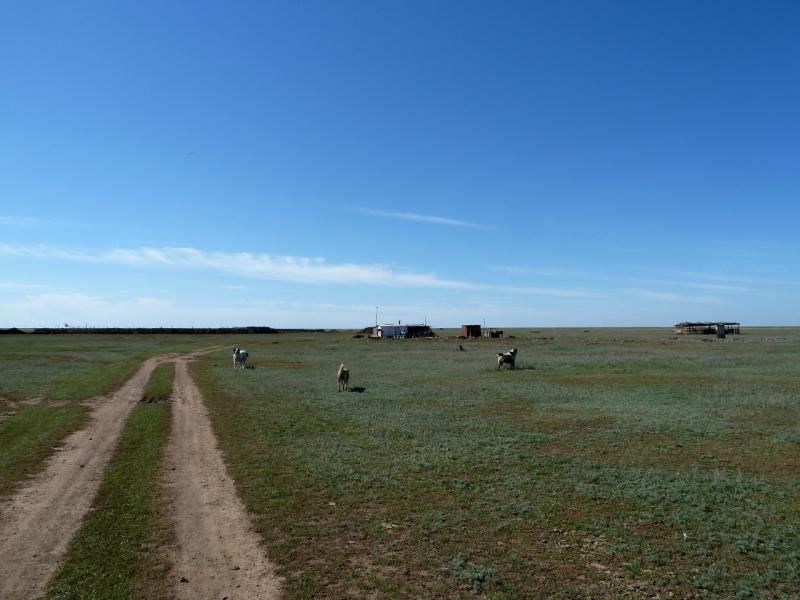 20130907. Стоянка скотоводов в местности между Евгеньевкой, Калкаманом и Майкаином.